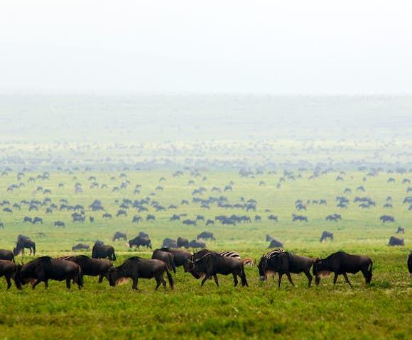 Dunia Camp in the Serengeti, Tanzania