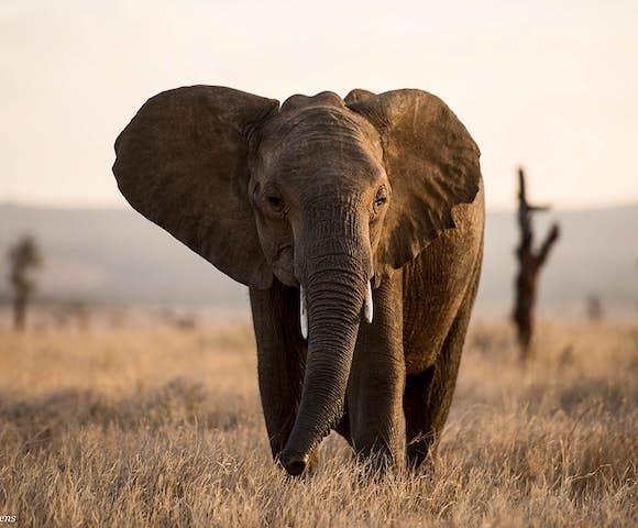Lewa Wildlife Conservancy in Kenya