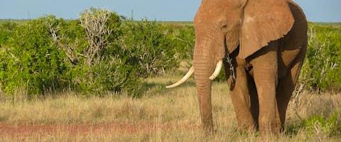 Kenya Guide