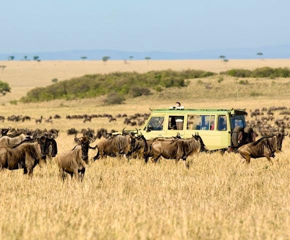 Wildlife in Kenya