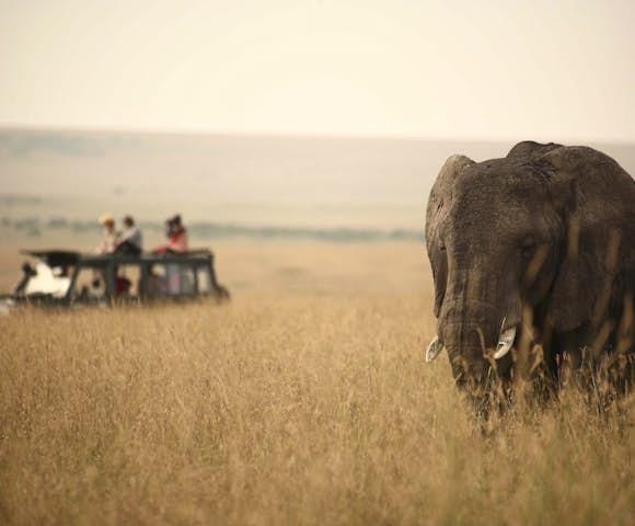 Elephant and vehicle on savannah, Maasai Mara