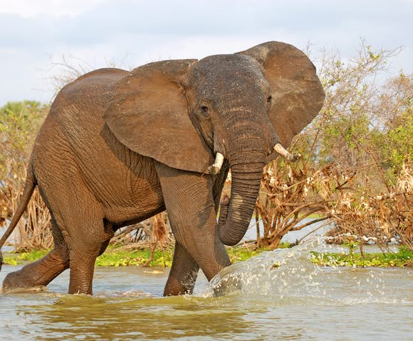Elephant in river, Selous Game Reserve, Tanzania
