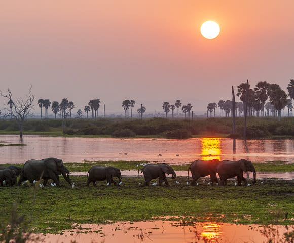 Sunset behind elephants at Selous Game Reserve, Tanzania