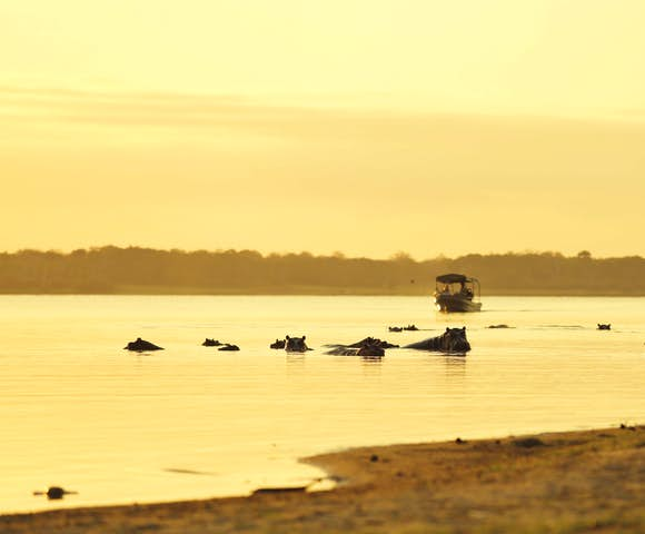 Hippos and boat on river at Selous Game Reserve, Tanzania