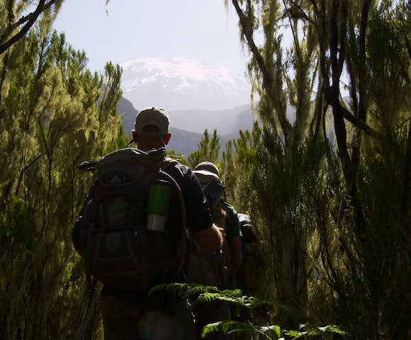 Man hiking through forest with view of Kilimanjaro in background